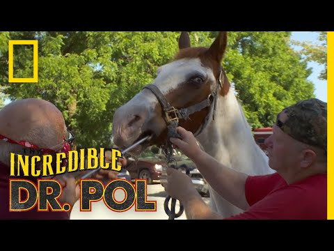 Horse Gets Its Teeth Shaved | The Incredible Dr. Pol