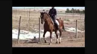 How To Teach A Horse Piaffe Part 2