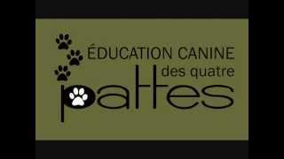 Dressage chien : Quoi faire si mon chien mange trop vite, mange ses selles ou mange tout!