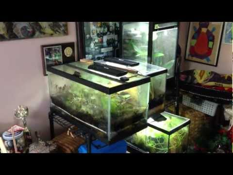 Poison Dart Frog Room Update 1-23-2013