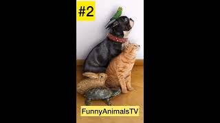 забавные животные 2019/ смешные котики/приколы с животными