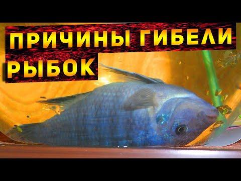 Почему умирают рыбки в аквариуме! Причины гибели аквариумных рыбок! ТОП 7 причин гибели рыбок!
