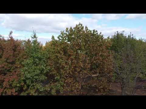 Video Of Lake Auburn Campground, MN