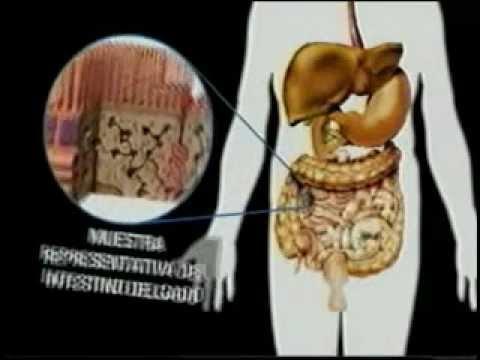 El envolvimiento por la película alimenticia para el adelgazamiento por el vinagre de manzana