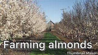 How Are Almonds Grown? Part 1
