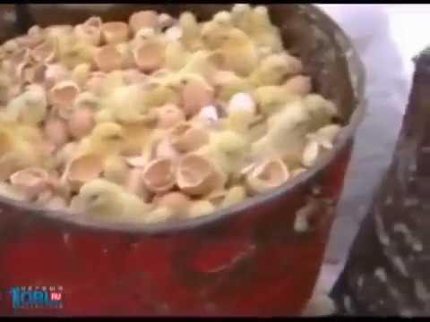 Холодная закуска из печени с майонезом