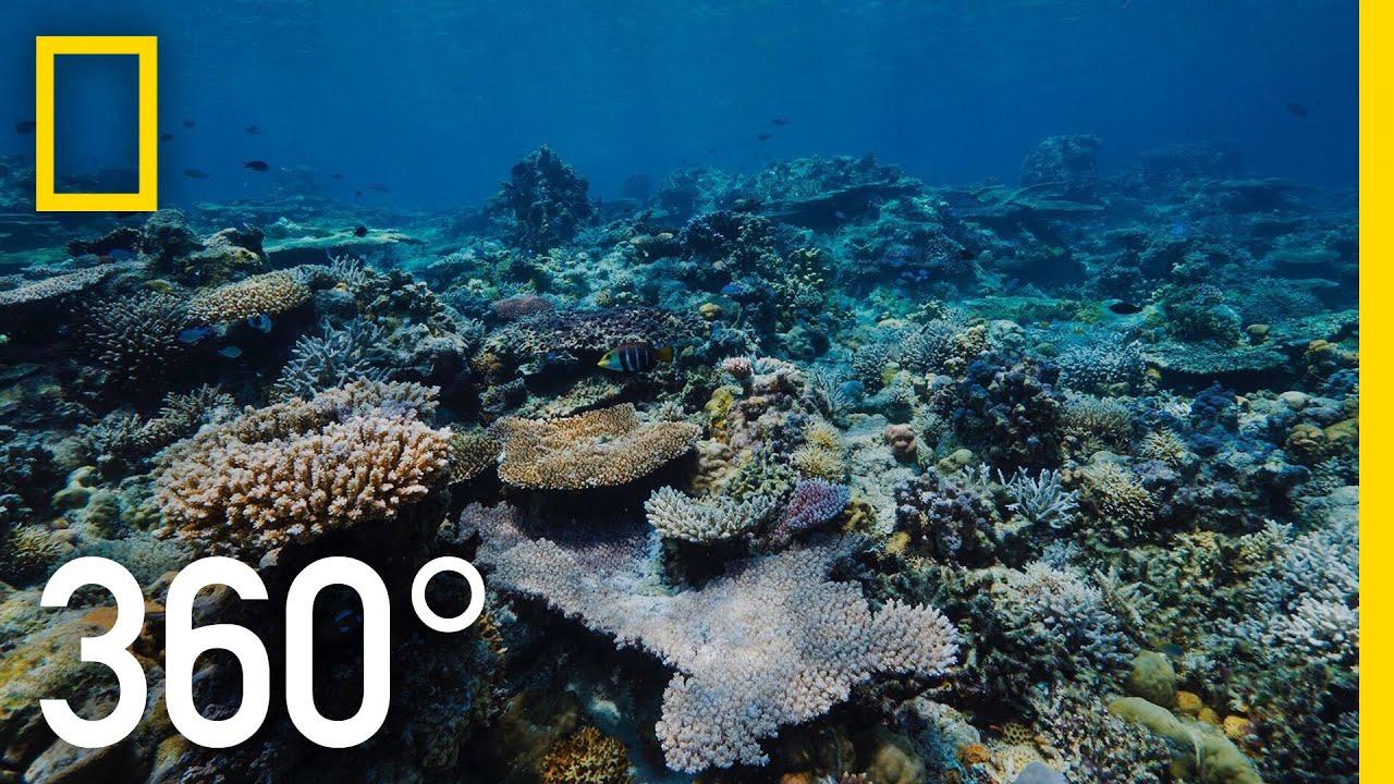 Grandpa's Reef - 360 | National Geographic thumbnail