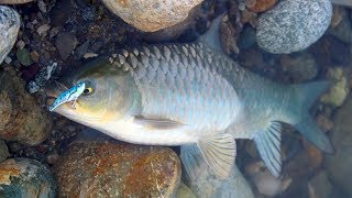 Şanlıurfa'da Unutulmaz Bir Av Yaptık !! / Yok Böyle Bir Balık Bolluğu