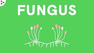 CH06-MICROBIOLOGY-PART04-FUNGI