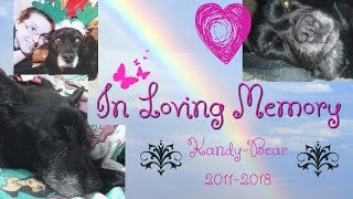 In loving memory of Kandy-Bear. October 27th, 2001 -  March 16th, 2018
