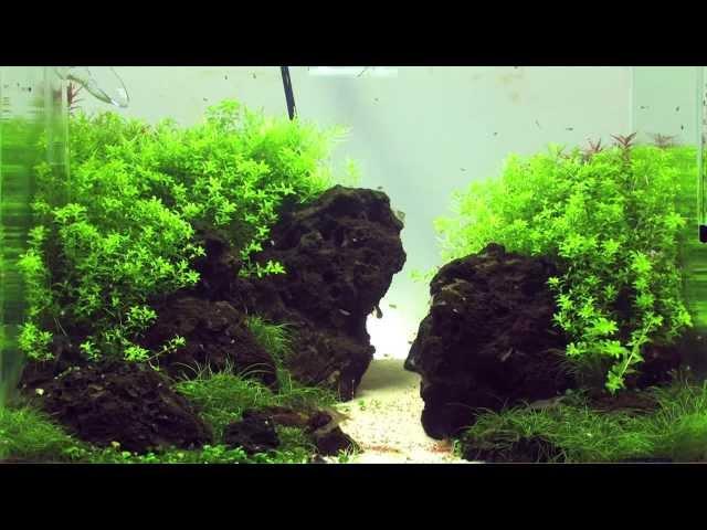 Einrichten eines Aquascaping Aquariums