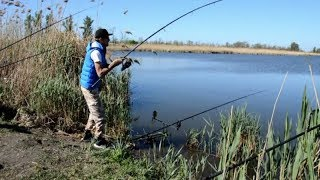 Сазан ловля на озере