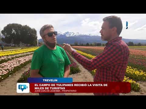 Trevelin | El Campo de Tulipanes recibió la visita de miles de turistas