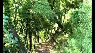 preview picture of video 'Comune di Collesalvetti'