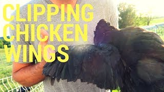 Clipping Chicken Wings