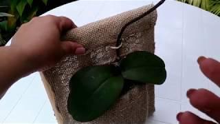 Orquídea Plantada  Na Juta De Fibra Natural
