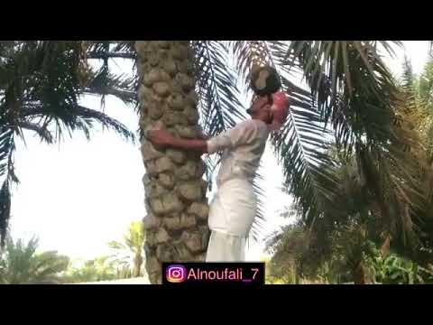 Omani freestyle footballer climbs a palm tree with a ball on his head