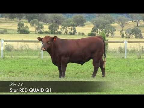 STAR RED QUAID (AI) (AMF) (MAF) (NHF) (OSF) LEJQ1