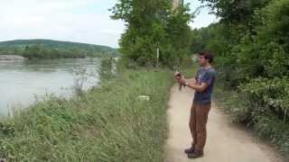 preview picture of video 'Release of a Peregrine Falcon at Sinzing highway bridge 2013 - Wanderfalke freigelassen'