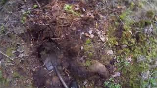 Metallin etsintää metsästä. hylsyjä löytyi.
