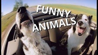 ПОПРОБУЙ НЕ ЗАСМЕЯТЬСЯ - Смешные приколы и фейлы с животными 2018/ ТОПовая Подборка животных #2