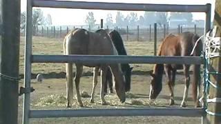 Barn Witches - Horse Barns- War Ethics- Barn Bullies- Mr. T Horsemanship - Rick Gore Lecture