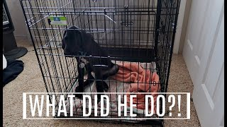 LEAVING OUR PUP AT HOME ALONE FOR THE FIRST TIME