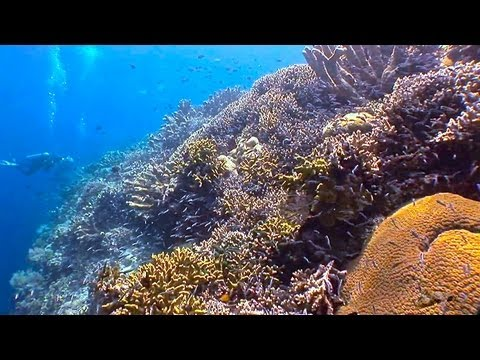 Bunaken National Park, Dive Site, Part.1, Bunaken (Nationalpark Bunaken),Indonesien