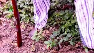 Download Video Cornerstone Films Int'l Presents Adigunjale Emi Part 1 MP3 3GP MP4
