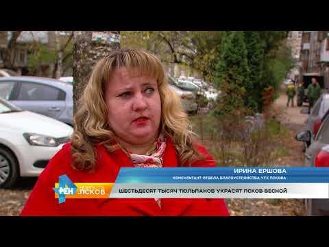 Новости Псков 24.10.2017 # Весной в Пскове посадят 60 тысяч тюльпанов