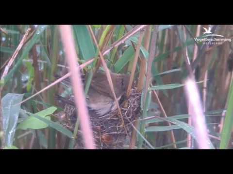 01.07.17 (Zusammen auf dem Nest)