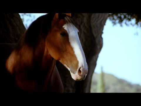 Budweiser Commercial (2009) (Television Commercial)