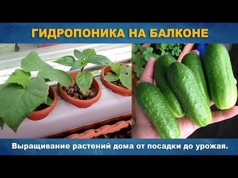 ГИДРОПОНИКА НА БАЛКОНЕ - Выращивание растений дома на одном питательном растворе от семян до урожая