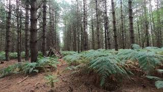 Fpv in a forest with a cinewhoop