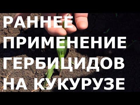 Технология раннего применения гербицидов в посевах Кукурузы