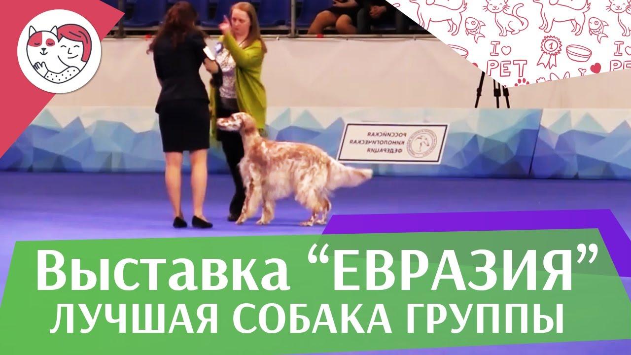 Лучшая собака 7 группы по классификации FCI 19 03 17 на Евразии ilikepet