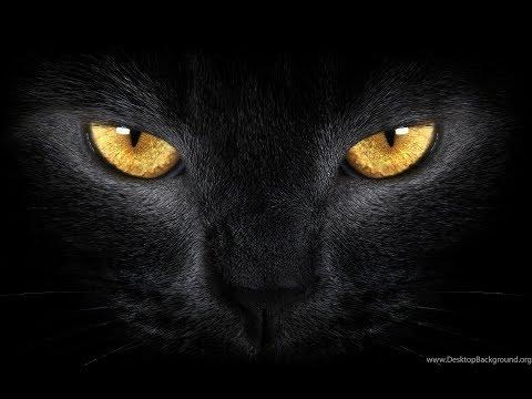 Если черная кошка появилась у вашей двери.Что значит черный кот.Черные кошки и удача.