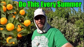 Do This Every Summer To Your Citrus Trees To Maximize Tree Health & Fruit Set