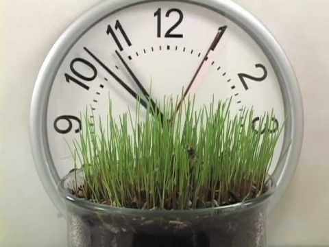 Grass Growing Time Lapse Mp3
