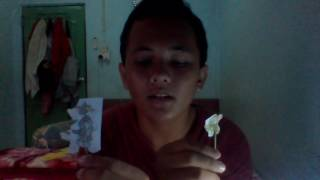 storytellingsmpn4batam/andre saputra/8B/THE CAT AND THE MOUSE