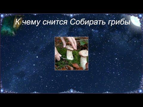 К чему снится Собирать грибы (Сонник)