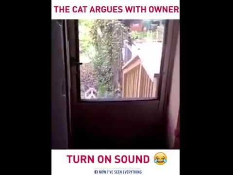 THIS CAT ARGUES WITH OWNER TUN SOUND