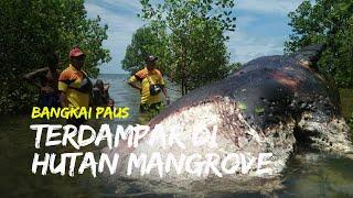 Bangkai Paus Terdampar di Hutan Mangrove, Panjang mnecapai Sembilan Meter