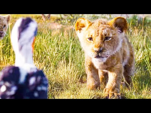 I Just Can't Wait to be King Song Scene - THE LION KING (2019) Movie Clip