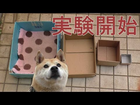 Pranking a Dog with Shrinking Boxes