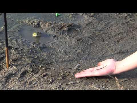 Jak nakarmić żabę?