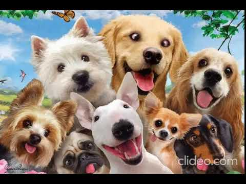 Youtube Video for Dogs 3D Selfie Puzzle