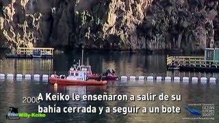 Esta es la historia de Keiko, la orca de Free Willy.