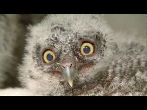 A Rare Look At Baby Great Horned Owls The National Wildlife Federation Blog The National Wildlife Federation Blog