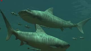 Живые обои для рабочего стола.(Tiger Sharks 3D Wallpaper)Live Wallpapers for your desktop.